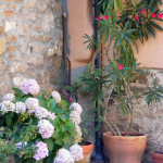 Detalle de plantas